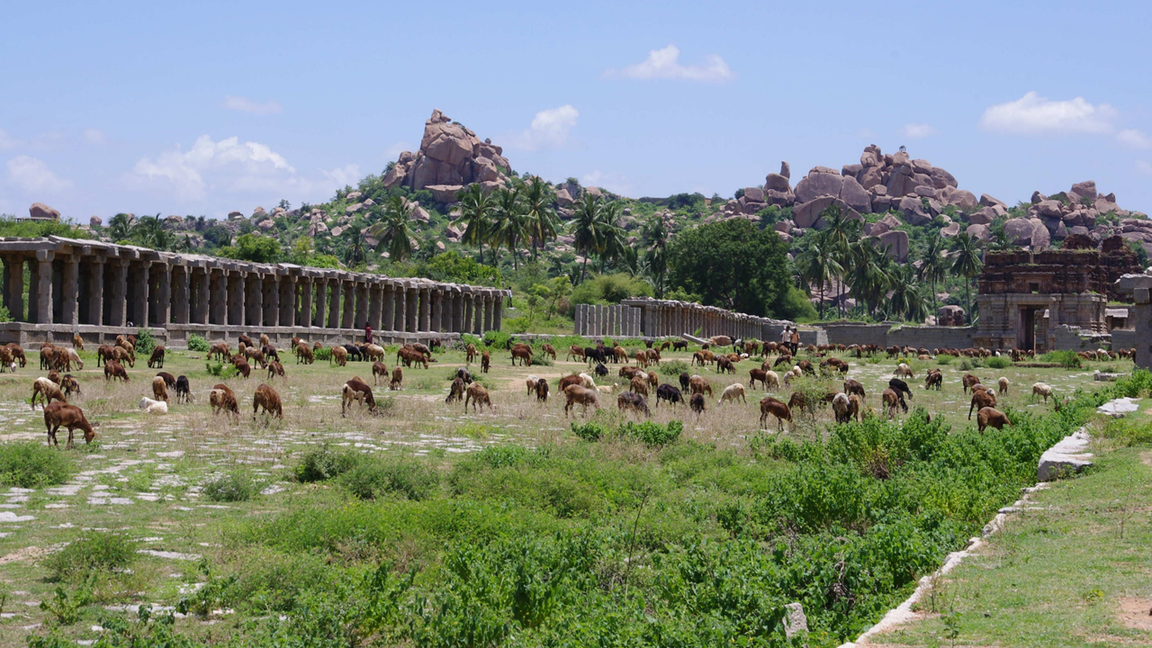 Marked street with goats, Hampi (Karnataka)