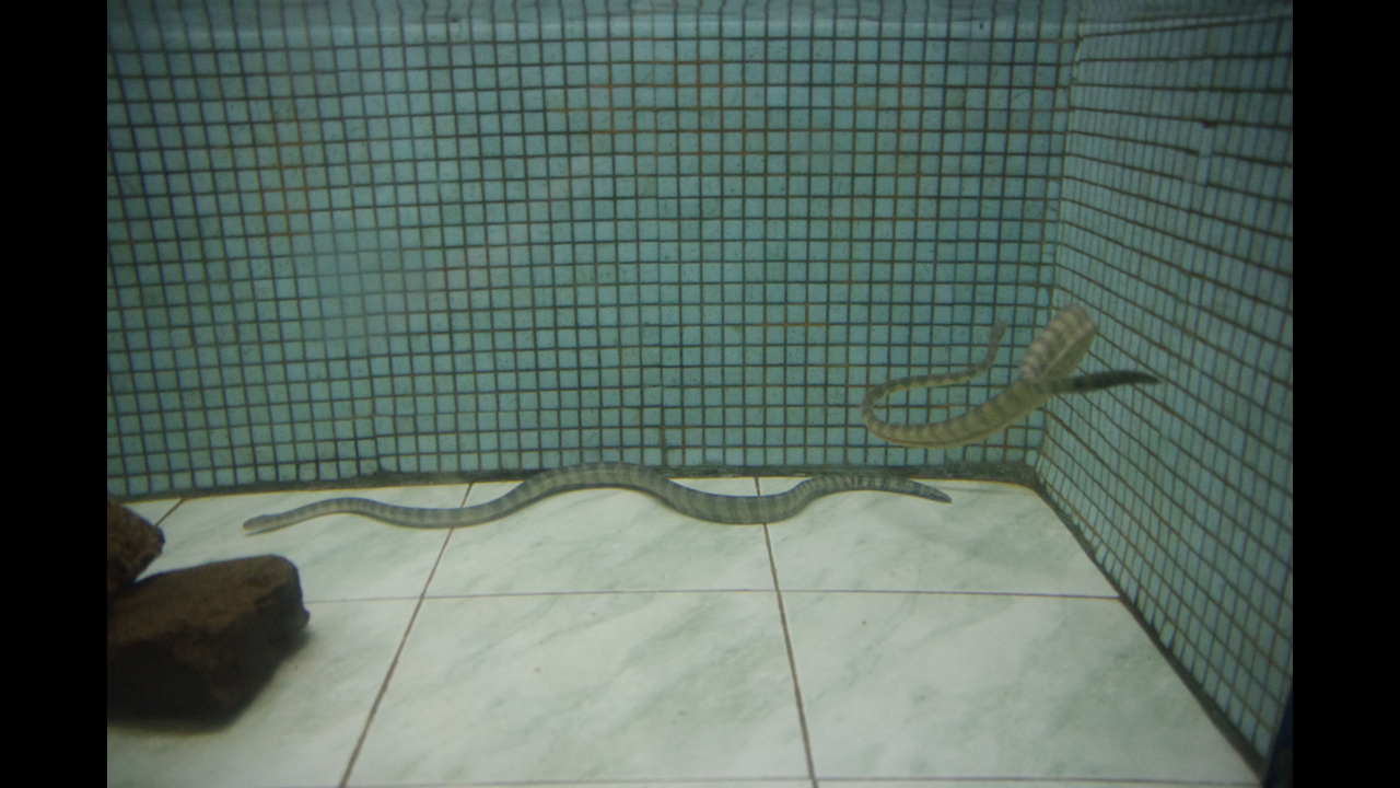 Sea snakes Aquarium in Ratnagiri (Maharashtra)